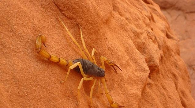 skorpio